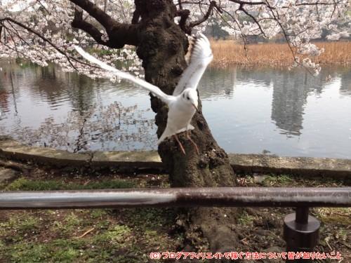 上野公園のハト